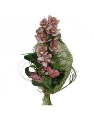 Орхидеи - Цимбидиум