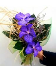 Орхидея Ванда 1