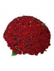 Рози 99 или 101 бр.